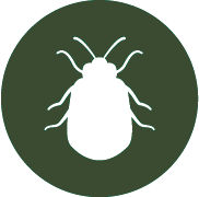 Bed bug control in Hobart